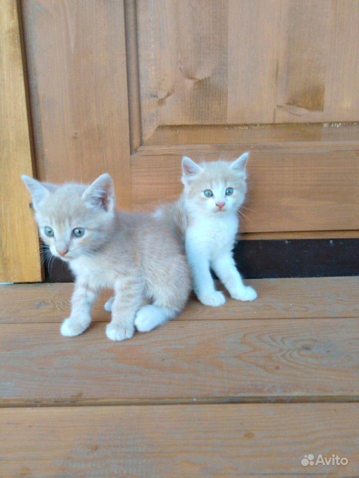 Отдам котят в Анапе - фотография № 5