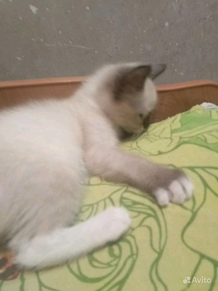 Котята 2 месяца отдадим бесплатно в добрые руки в Барнауле - фотография № 4