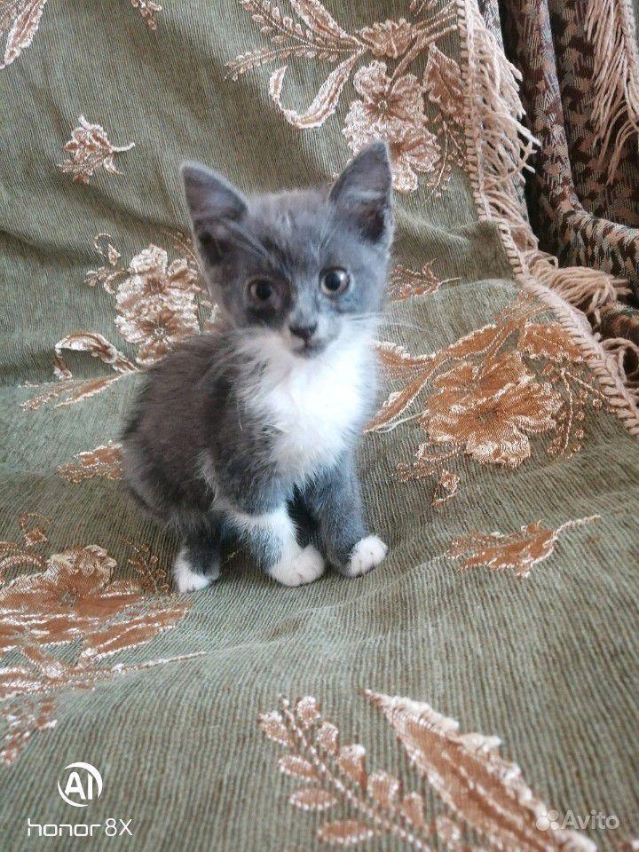 Котятки в добрые руки в Георгиевске - фотография № 1