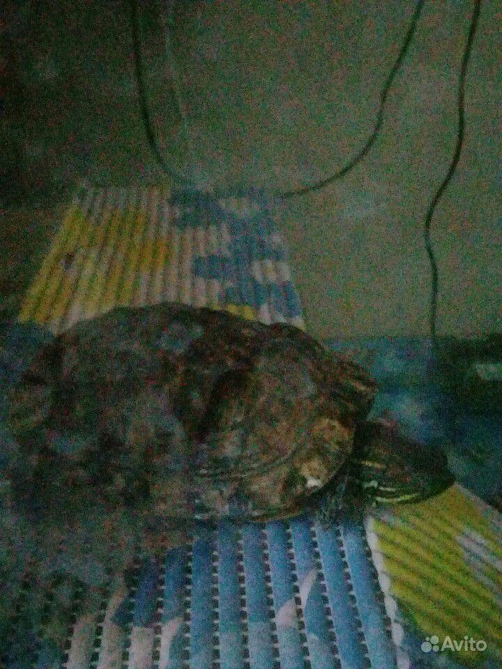 Отдам красноухих черепах 2 шт