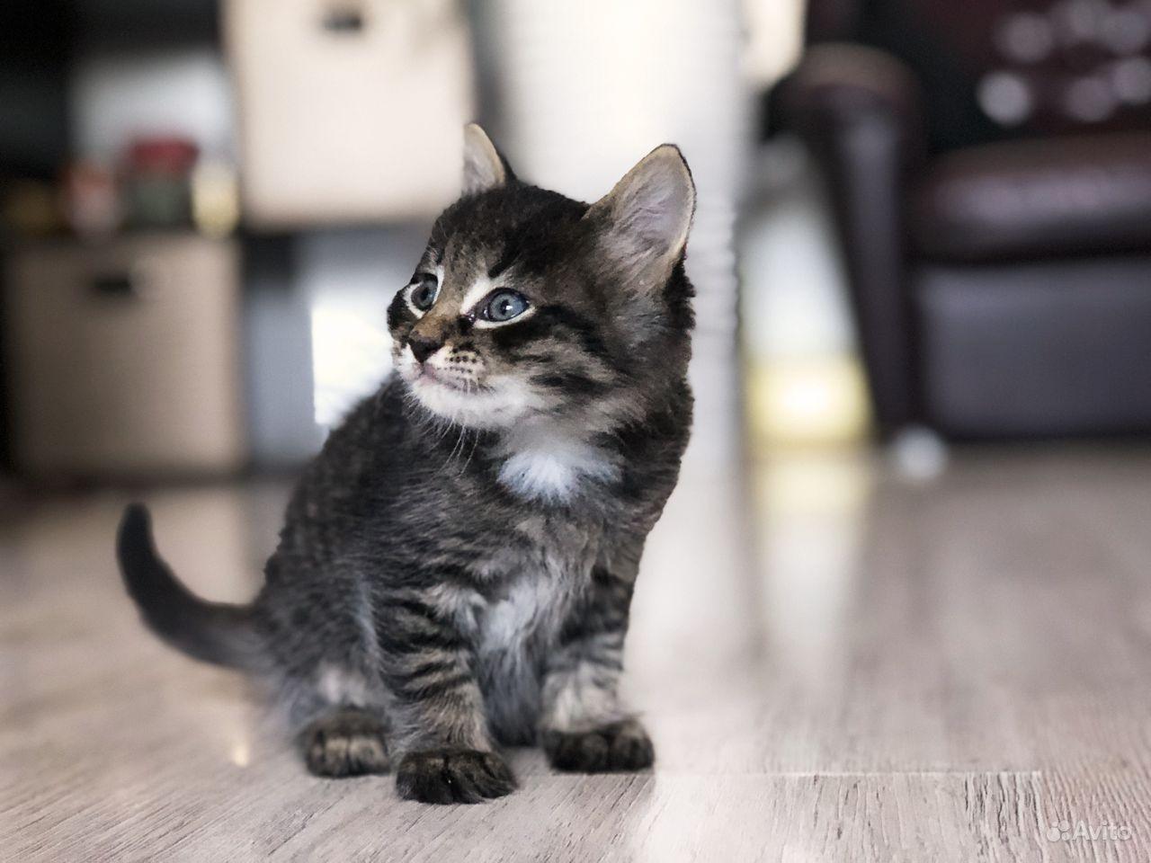 Милый котята