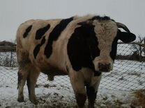 Подать объявление о продажи коровы в шацке бесплатно и без регистрации дать объявление на сайте