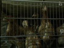 Доска объявлений абакан животные дать объявление в авс