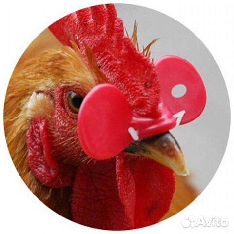 услуги электрика цыплята клюют лапы до крови много других поздравлений