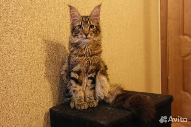 Авито вязка кошек и котов