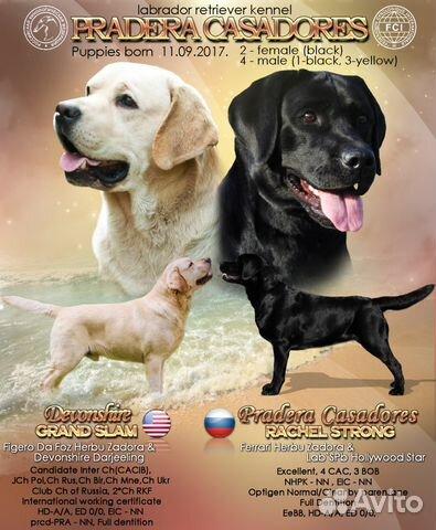 Подать объявление вологодский клуб собаководства подать объявление в колпашево