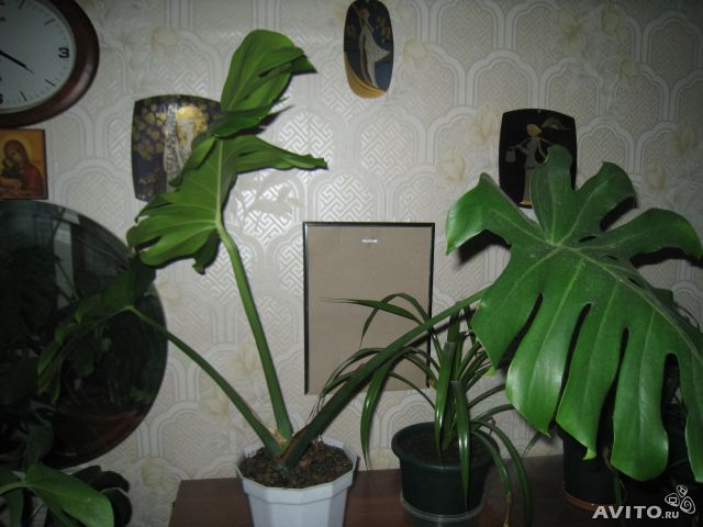 Где купить комнатные цветы г. челябинск букет на свадьбу купить киев