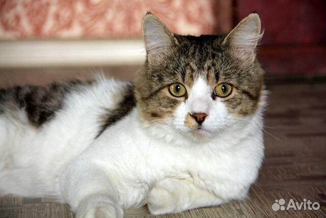 89137249811 Добрый и очень большой котик Тимоша