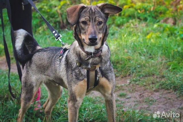 Собака ищет дом купить на Зозу.ру - фотография № 8