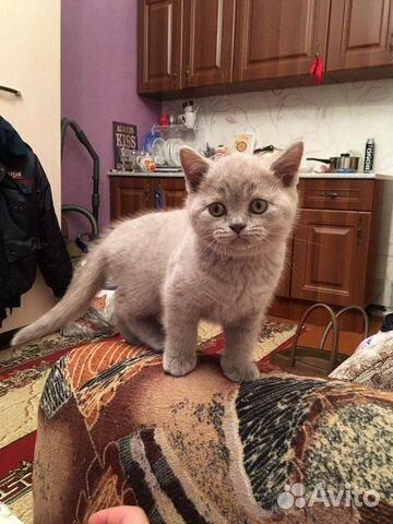 Кошка  89000146588 купить 1
