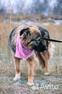 Пушистая собака в дар купить на Зозу.ру - фотография № 3