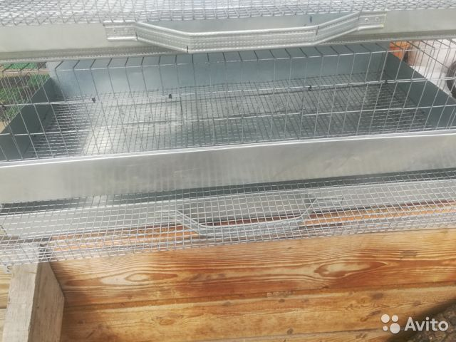 Cage for quails  buy 1
