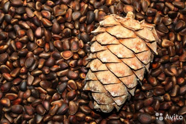 Pine nuts  89237556000 buy 1