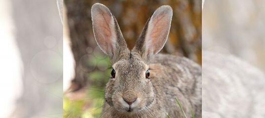 Продаются кролики купить в Ставропольском крае | Животные и зоотовары | Авито