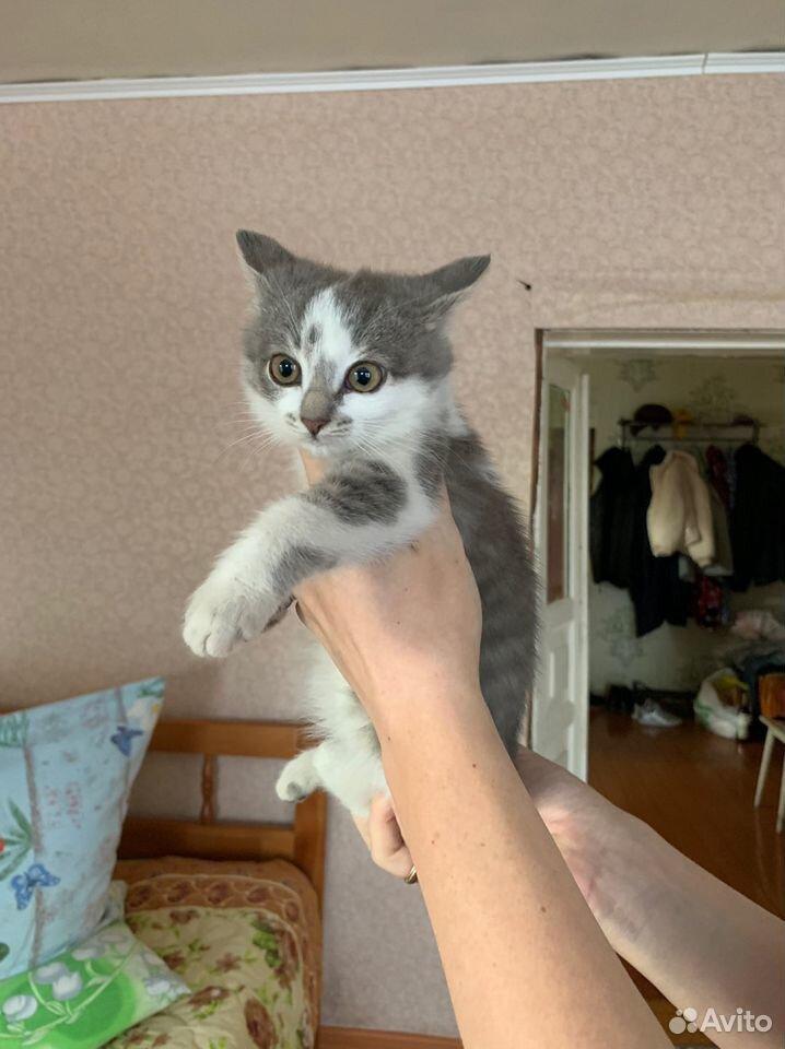 Котята в добрые руки бесплатно  89876955069 купить 2