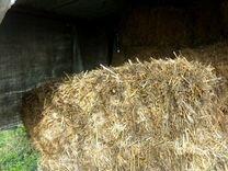 Солома пшеничная и ячменая — Животные в Великовечном