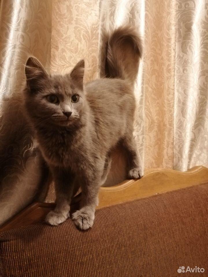 Кошечка в дар  89058795574 купить 1