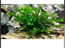 Растения аквариумные — Аквариум в Геленджике