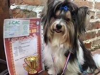 Вязка — Собаки в Геленджике