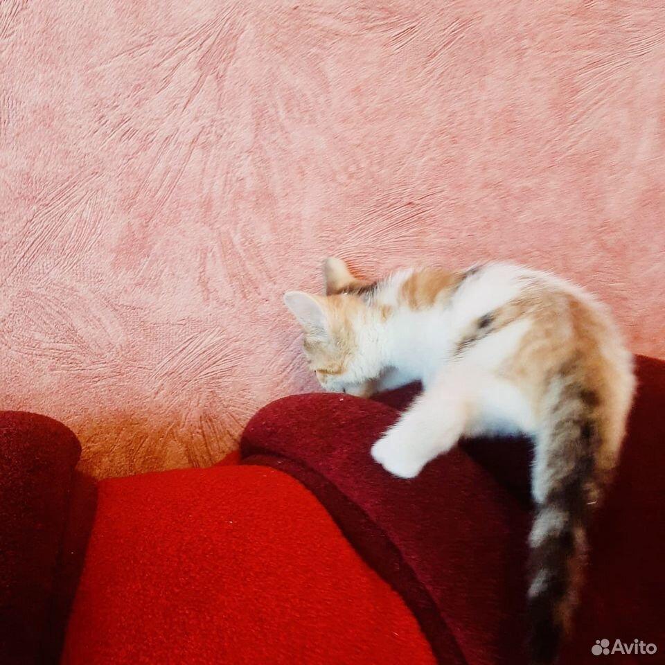 Give kitten in good hands  89379140006 buy 6