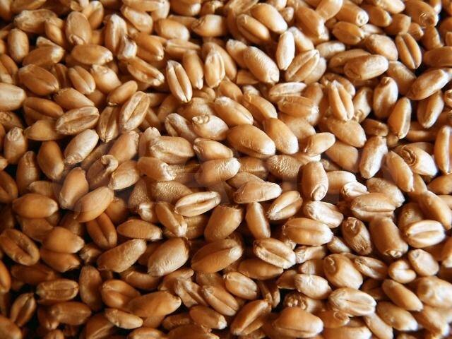 продаем пшеницу с элеватора