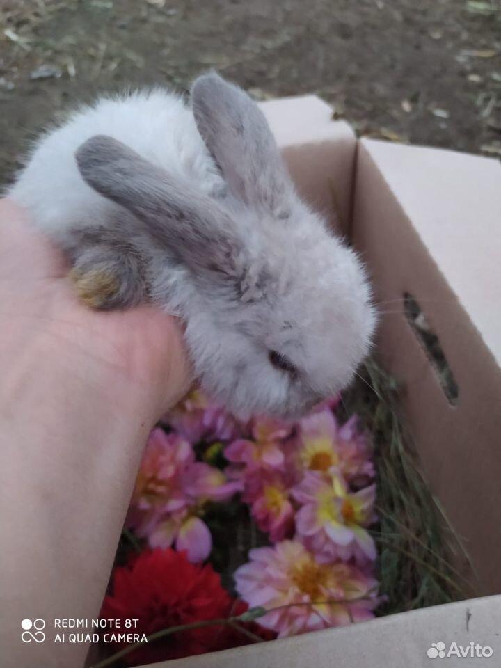 Кролики разных пород  89887675229 купить 1