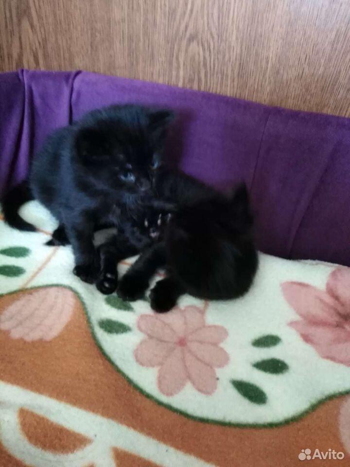 Котята даром  89841611281 купить 3
