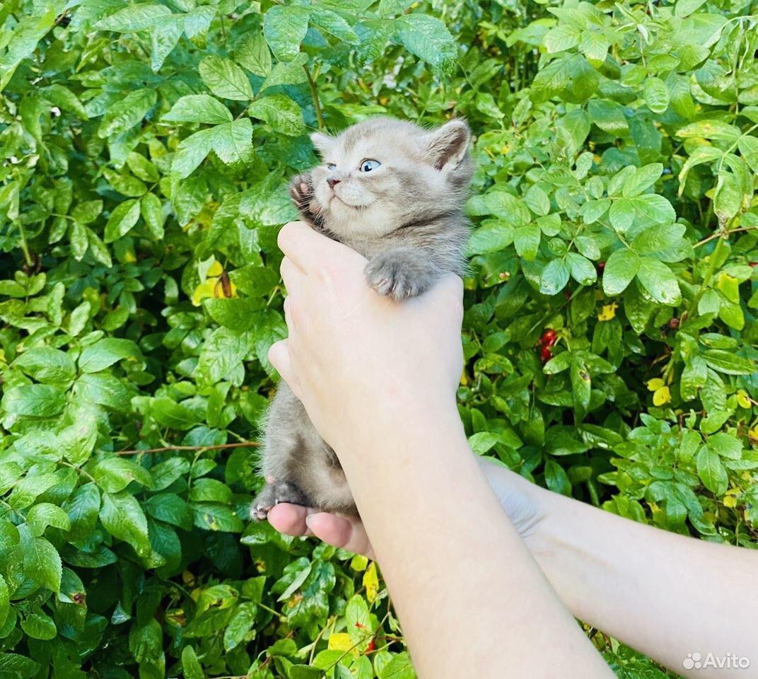 Кошечки и котики  89807082745 купить 5