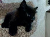 Чёрный котёнок девочка в дар
