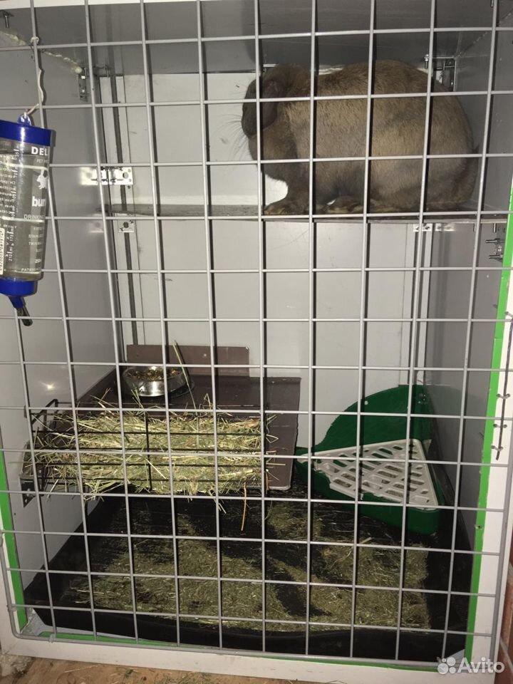 Клетка с кроликом  89121139776 купить 1