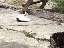 Кот молодой