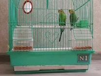 Волнистые попугаи пара