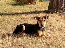 Симпатичный пёсель :) — Собаки в Геленджике