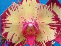 Орхидеи в огромном ассортименте