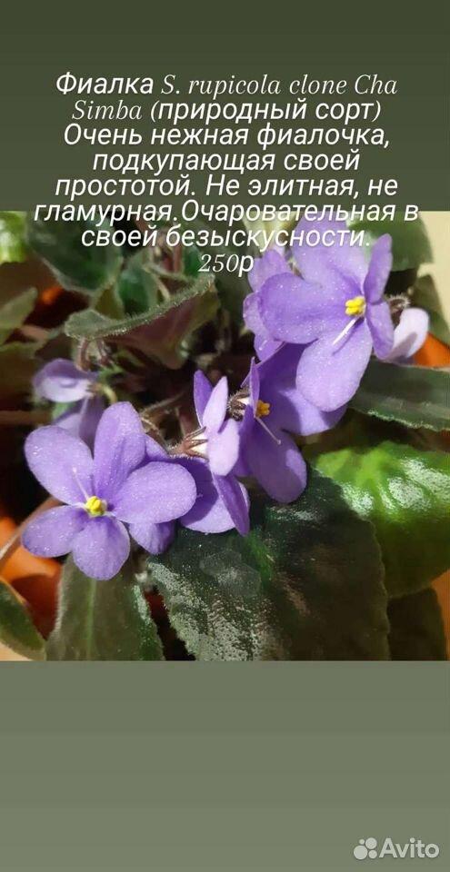 Цветы  89176088037 купить 4