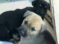 Собачки — Собаки в Геленджике