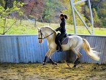 Продается лошадь андалузской породы