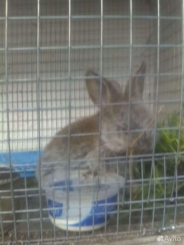 Кролик  89875253183 купить 1
