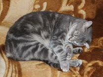 Кошечка Ласка в добрые руки